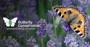 <b>Butterfly</b> Conservation: Home page