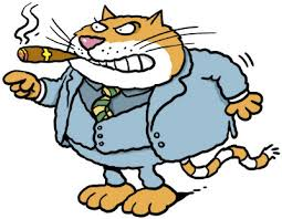 תוצאת תמונה עבור angry cat