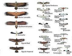 27 All Inclusive Bird Size Comparison Chart
