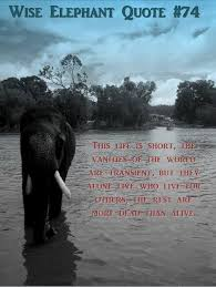 Elephant Quotes Delectable BIGWORDS Smallhands Wise Elephant Quote 48