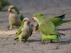 my pet animal parrot essay  my pet animal parrot essay