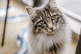 cat.  Cat And Cat I