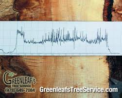state of the wood by recording the drill resistance of the needle penetrating the wood this data is collected and printed on a wax paper strip