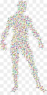 Universal Genetic Code Chart Genetic Code Png Genetic Code Wheel Human Genetic Code