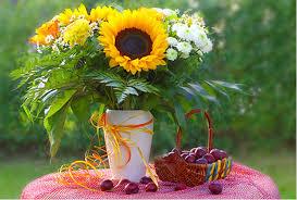 Bildergebnis für sonnenblume und Kind