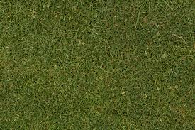 grass texture tall grass seamless39 tall