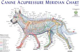 Canine Acupuncture Meridian Chart Canine Meridian Chart Single