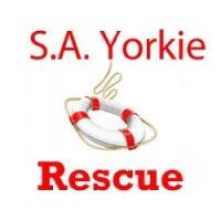 Angelique Norton - Organization Manager - SA Yorkie Rescue | LinkedIn