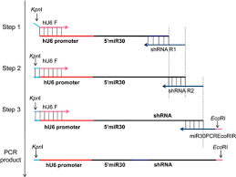 The Flow Chart Of Three Sequential Pcr Steps For Constr Open I