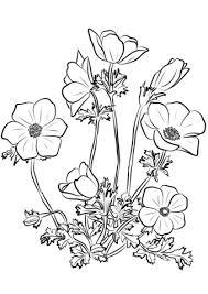 Disegno Di Anemone Coronaria Da Colorare Disegni Da Colorare E