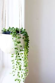 hanging plants 10 ways to make your bedroom more peaceful
