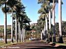 imagem de Cambará Paraná n-13