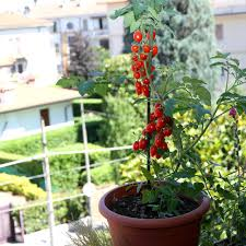 apartment vegetable garden.  Garden If You Live In An Apartment Might Think Donu0027t Have Room For A Garden  But The Typical Balcony Offers Just Enough Space To Set Up Edible  On Apartment Vegetable Garden