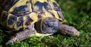 reptile bedding guide pet emporium