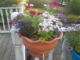 7 Container Gardening Ideas Beyond Summer Flowers  Maidenhair Container Garden Shade Plants
