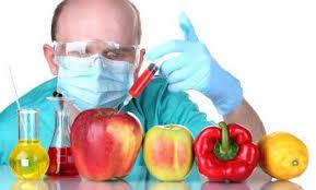 Скачать Генномодифицированные продукты реферат Генномодифицированные продукты реферат