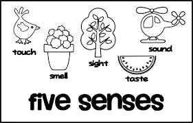 5 Senses Worksheets For Kindergarten Five Senses Coloring Pages For