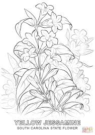 Small Picture South Carolina State Flower coloring page Free Printable