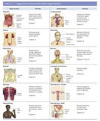 Human Body Systems Chart Body Organs Systems Charts Anatomy Posters And Anatomy Charts