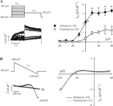 electrical excitability of the heart in a chondrostei fish the figure