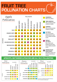 Fruit Tree Pollination Chart Fruit Tree Pollination Flower Power