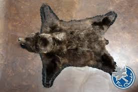 grizzly bear grizzly bear skin rugs