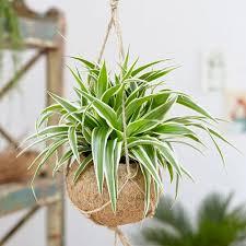 Купувайте и продавайте изгодно стайни растения онлайн в ① bazar.bg. Stajni Rasteniya Za Vsyaka Zodiya Astro Kutiya Woman Bg