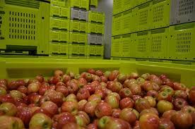 Storing Apples Apple Pear Australia Ltd Apal