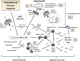Innate And Adaptive Immunity In The Development Of