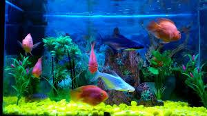 Beautiful Fish in dream house