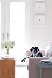 animal friendly furniture. Pet Friendly Furniture Kathy Kuo Home Animal O