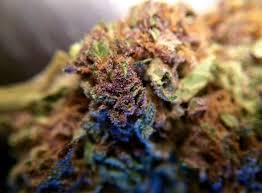 Purple Hindu Kush might put you to sleep (cannabis review) - oregonlive.com