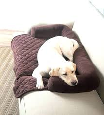 dog leather couch pet furniture covers for leather sofas sofa cover for pets best dog couch dog leather couch