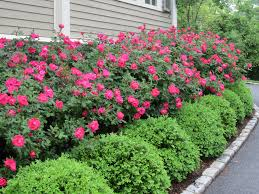 25+ beautiful Front house landscaping ideas on Pinterest   Front ...