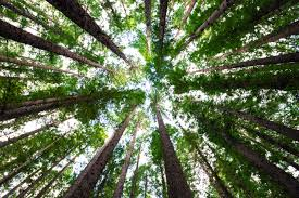 Image result for stock photo trees