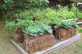straw bale gardening easy