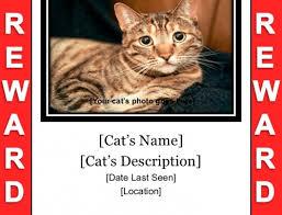 Lost Pet Flyer Maker Lost Cat Flyer Poster Templates Free Downloads 70