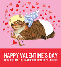 valentine cat images. Interesting Cat Who Wouldnu0027t Want To Get A Card Of Cat Wearing Diaper And Curly Wig  No One Thatu0027s Who And If They Donu0027t  Inside Valentine Cat Images