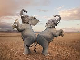 Afbeeldingsresultaat voor pairs of elefants