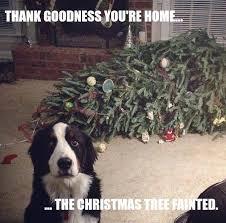 Funny Meme Dog Christmas Tree Fainted via Relatably.com
