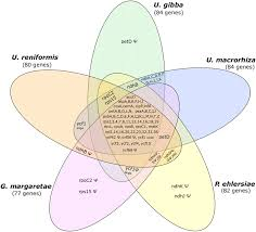 Venn Diagram Complement Venn Diagram Showing The Full Complement Of Genes Present In The