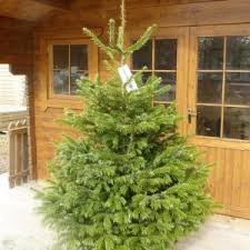 Real Christmas Tree Delivered