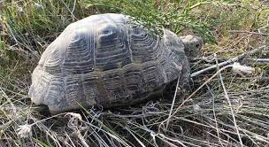 bedding for a greek tortoise