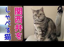 しゃべる 猫 関西 弁