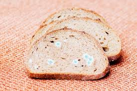 Can You Eat The Clean Part Of Moldy Bread Mnn Mother Nature