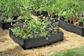 plastic raised beds multiple earth friendly recycled plastic raised garden beds planted with greens plastic raised beds