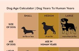 Dog To Human Years Conversion Chart Dogs Age Conversion Chart Doberman Weight Chart By Age