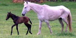 white baby horses playing. Fine Playing The Perfect Storm Inside White Baby Horses Playing C