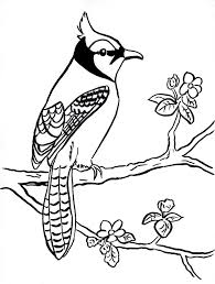 Small Picture Blue Jay Coloring Page Samantha Bell