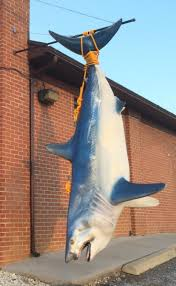 1000 images about art by kirby lewis new york large 11 foot shark i painted the body to liven things up and provide a
